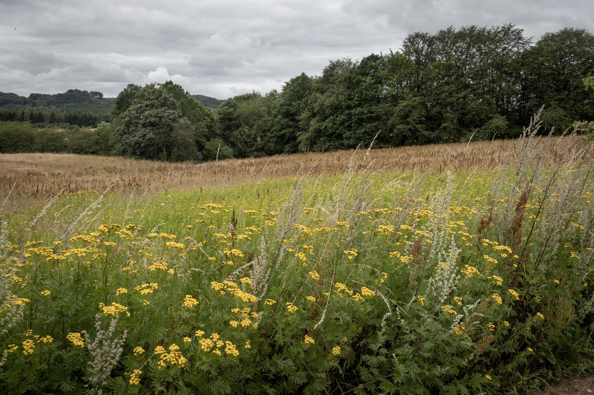 Een veld bij Braedstrup